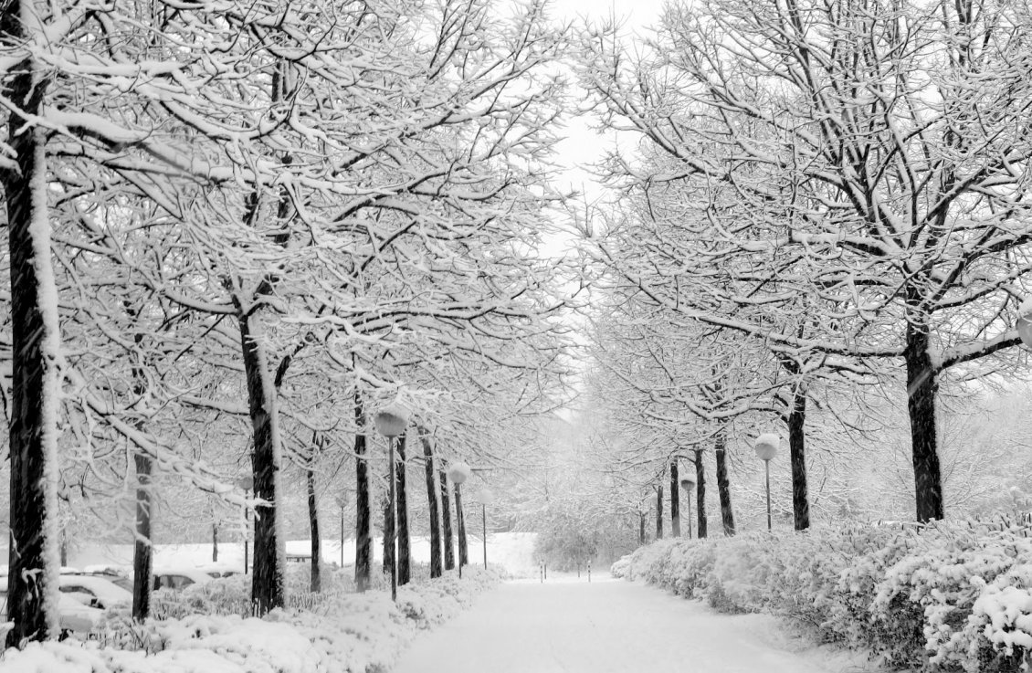 Download Wallpaper White path full with snow in the park - HD wallpaper