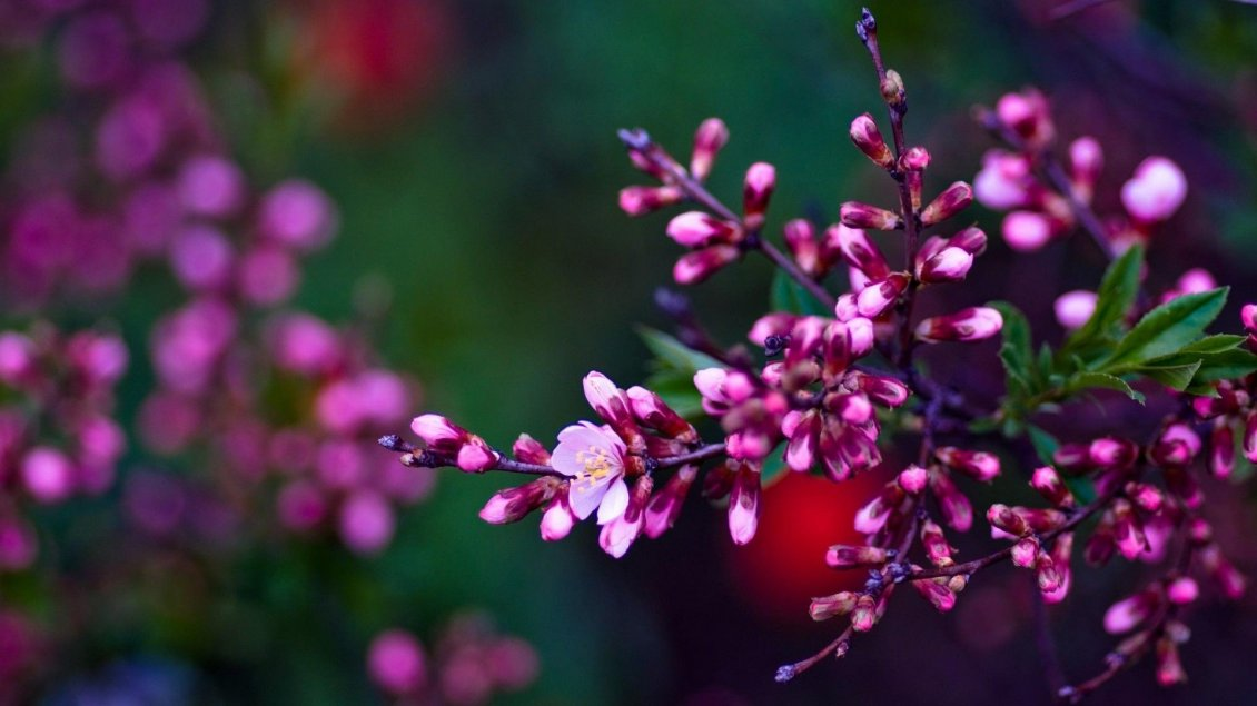Download Wallpaper The nature revive when spring season is back - Flowers