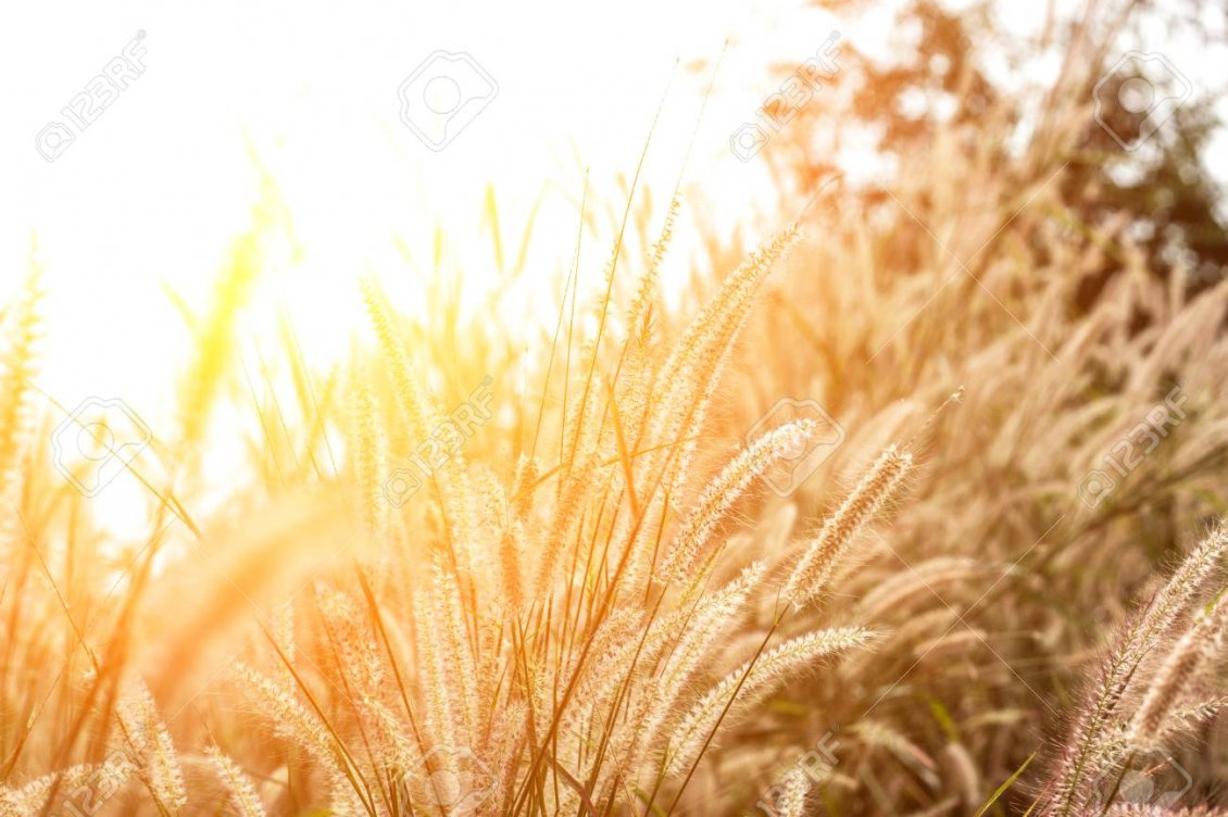 Download Wallpaper Autumn sunlight over the wheat field - HD wallpaper