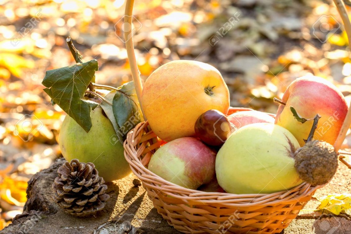 Download Wallpaper Autumn fruits - Basket full with delicious apples