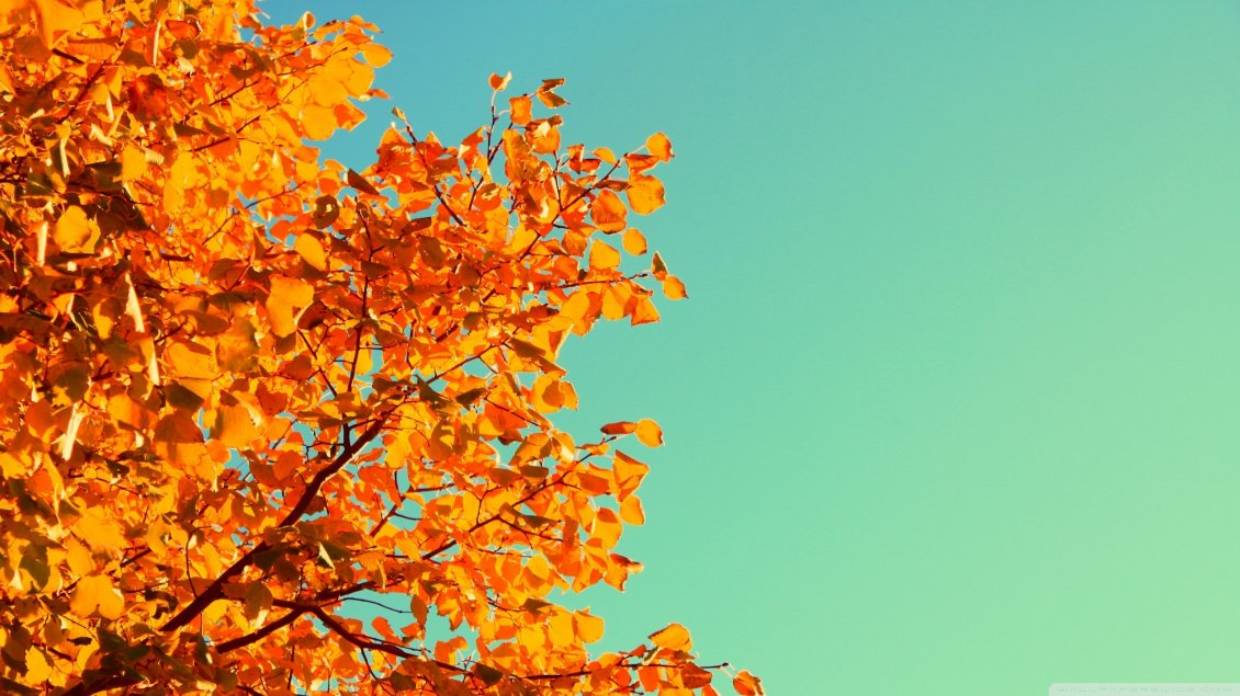 Download Wallpaper Beautiful Autumn tree and a blue yellow sky - HD wallpaper