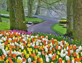 A beautiful spring day in park - Tulips in many colors