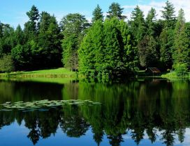 Lake like a mirror and trees around