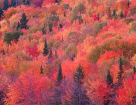 Colorful trees - autumn day in forest
