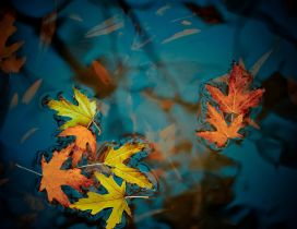 Fallen Autumn Leaves HD