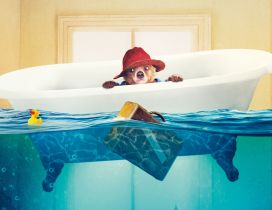 Paddington the bear with red hat, flooded bathroom
