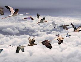 All birds flying over the clouds