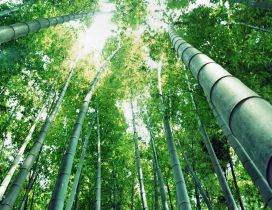 Awesome Bamboo Forest