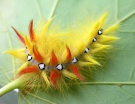 Colored caterpillar on a leaf