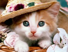 Cute kitten with hat between flowers