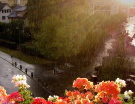 Colorful flowers in rain - Summer day