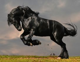Black horse standing up on two hooves