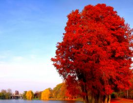 Red and yellow trees on the shore of lake