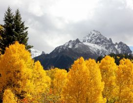 Yellow trees in the mountains