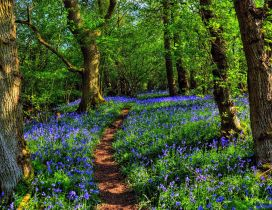 Blue flowers between trees in the green forest