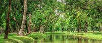 Beautiful nature - River in the green forest