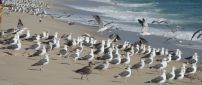 White and gray seagulls on the beach