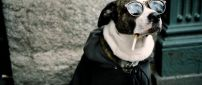 Dog with glasses and cigarette