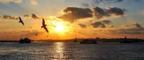 Sunset wallpaper - The birds flying over the sea