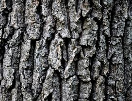 Grey tree bark HD