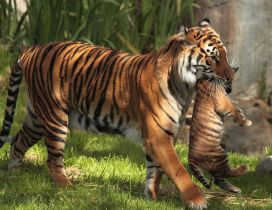 Tigress leads tiger cub in their shelter