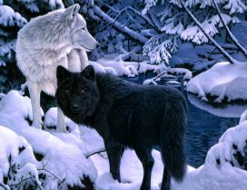 Black and white wolfs in the forest