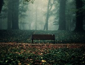 Park bench, autumn