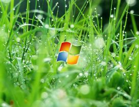 Windows glass in the grass with dew drops