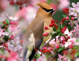 A beautiful brown bird on the blooming tree