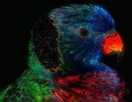 Artistic colorful bird wallpaper - Abstract wallpaper