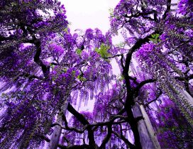 Purple flowers in the trees - Abstract wallpaper