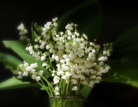 A bouquet of lilies of the valley in glass