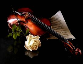 The music of violin  and a beautiful white rose
