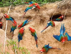 Many parrots pierce the walls of earth