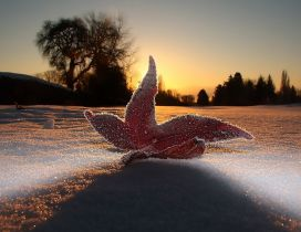 A red ice leaf on the snow - Winter season