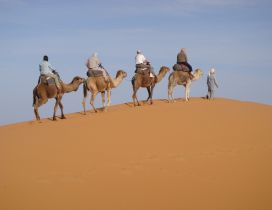 Men on camels climb hills of sand in dessert