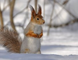 A white and brown squirrel on the snow