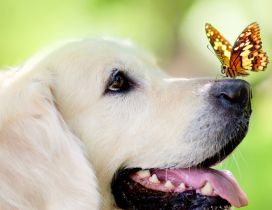 White dog with a butterfly on the snout