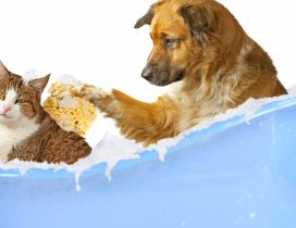 Dog and cat in a bathtub with foam
