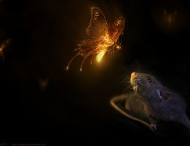 Butterflies with light in night and a mouse