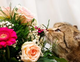 A cute gray cat smells the flowers