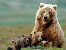 Brown bear mother with her cubs