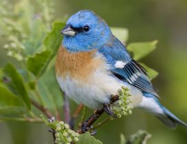 A beautiful blue bird on the branch