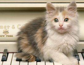A scared cat on the piano keys
