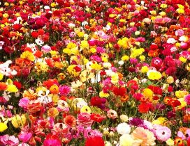 A field with colorful flowers