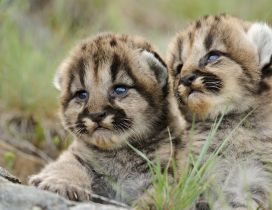 Two amazing baby animals - HD wallpaper