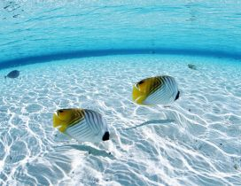 White and yellow fish on the seabed