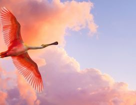 A red bird flying on the sky with red clouds
