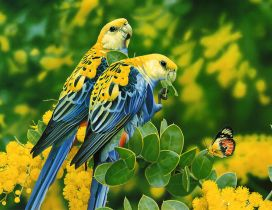 Two blue and yellow birds and a butterfly on the leaves