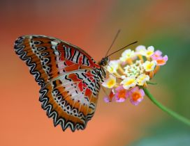 Splendid colored and striped butterfly on a flower